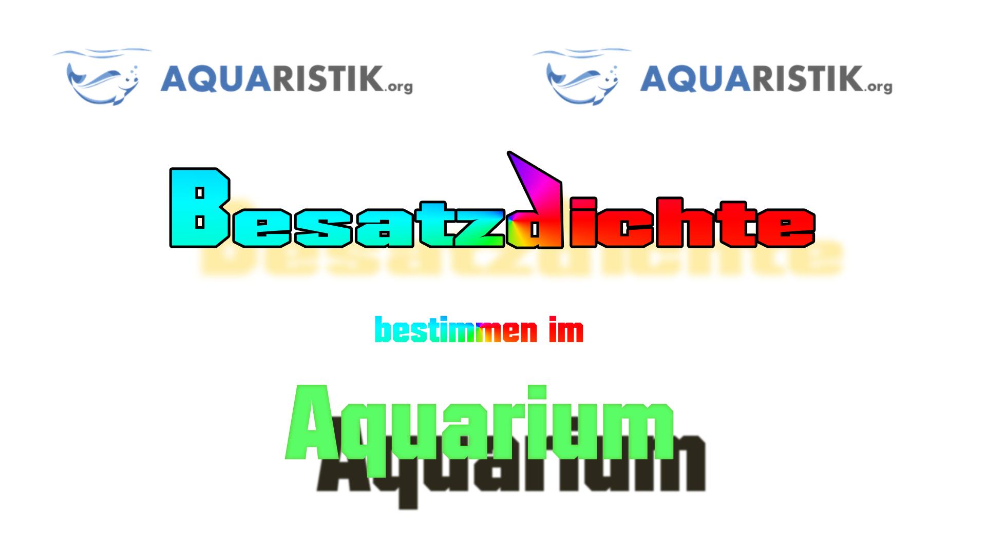 Besatzdichte Aquarium