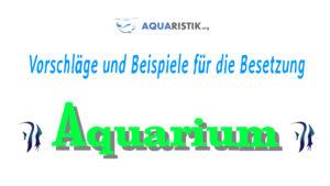 Besetzungsvorschläge und Besatz Beispiele für ein Aquarium