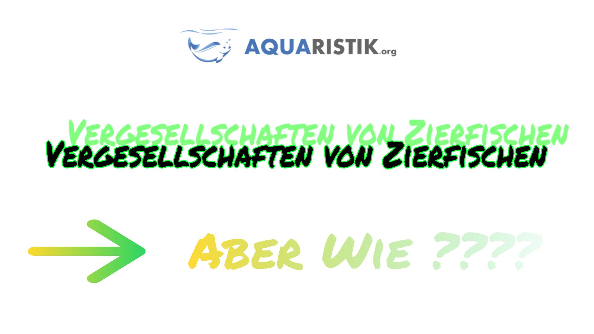 ergesellschaftung Aquarium