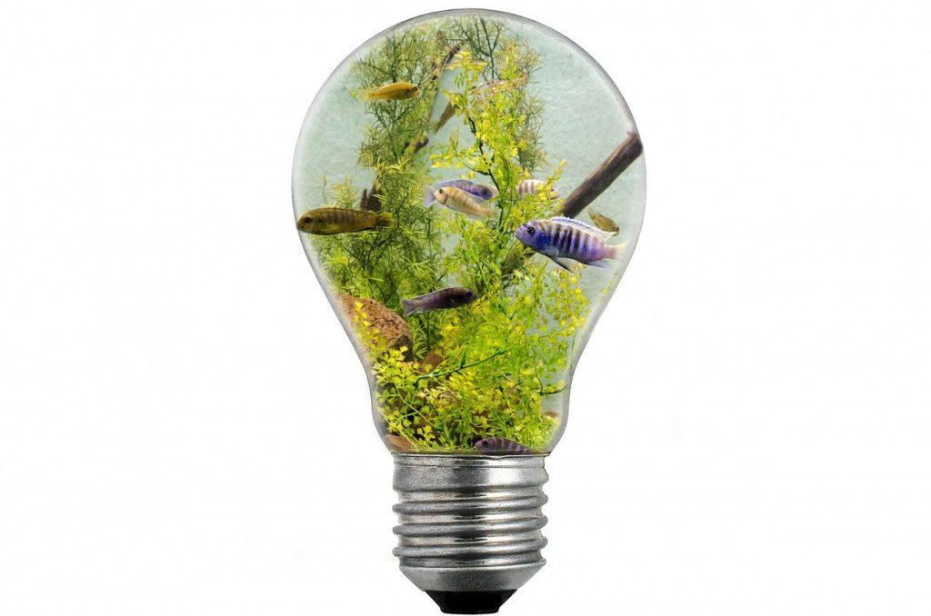 Aquarium, Licht