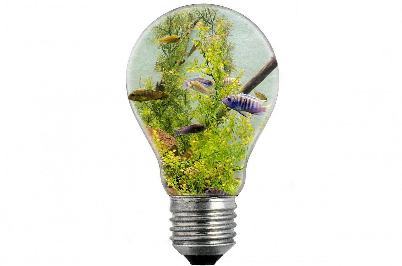 aquarium beleuchtung ratgeber rund um das licht in der. Black Bedroom Furniture Sets. Home Design Ideas