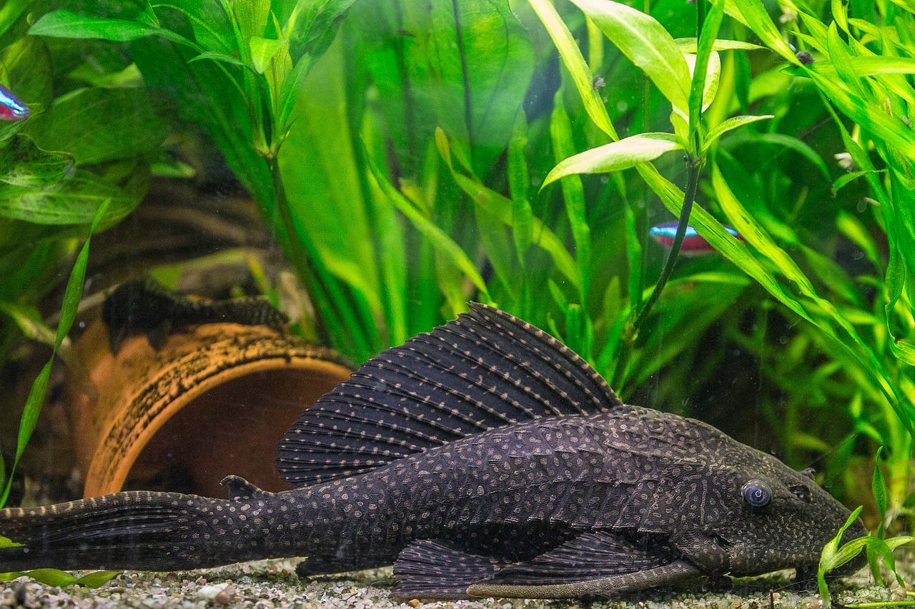 Arten und gruppen von s wasser zierfischen im aquarium for Aquarium fische arten