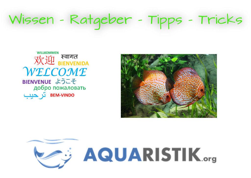 Aquaristik org