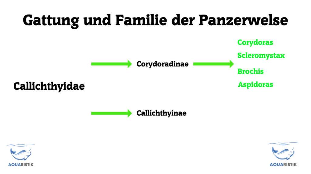 Familie Panzerwels
