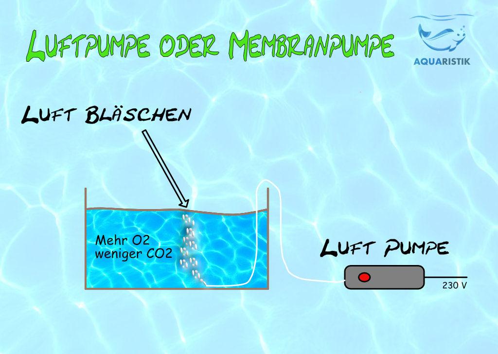 Luftpumpe Aquarium