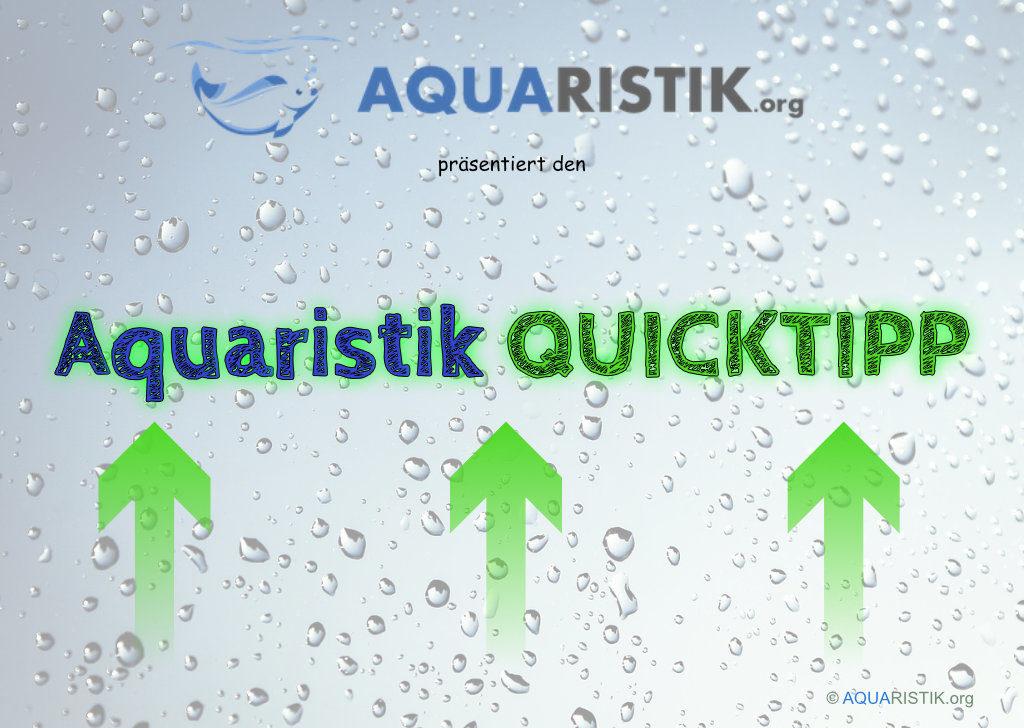 QuickTipp Aquaristik.org
