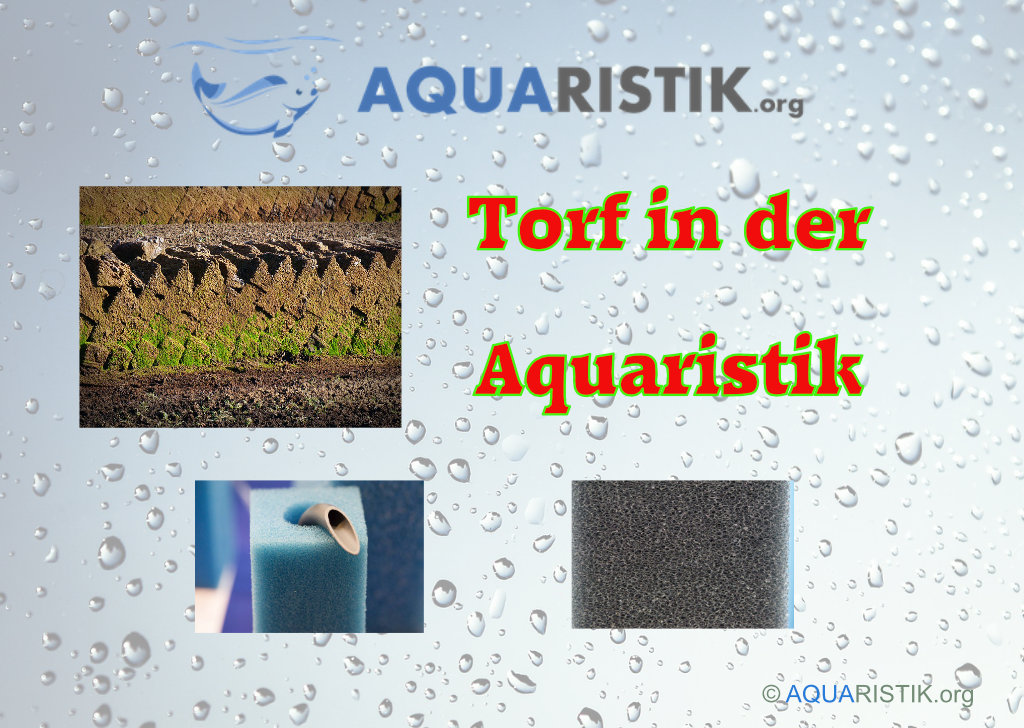 Gut gemocht Torffilterung: Was bewirkt den Torf im Aquarium? - Aquaristik QB56