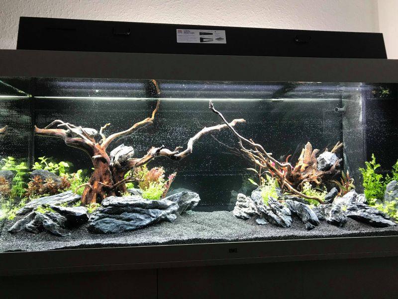 juwel rio 450 einrichtungsbeispiel mit aquascaping by alex aquaristik. Black Bedroom Furniture Sets. Home Design Ideas