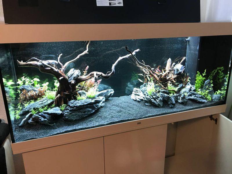 Juwel Rio 450 Einrichtungsbeispiel Mit Aquascaping By Alex Aquaristik